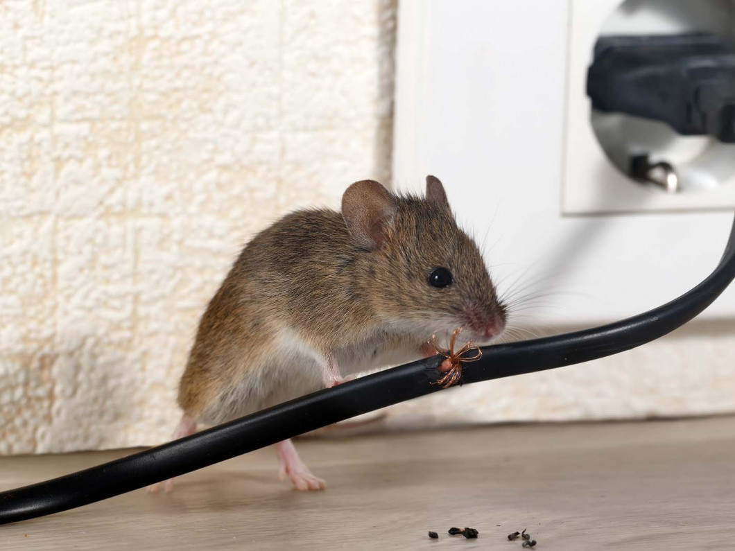 Rid Your Home or Office of Pests